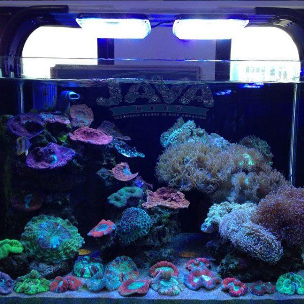 beragam jenis coral aquarium air laut tersedia di toko kami