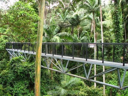 Tamborine Rainforest Skywalk in Gold Coast - Australia