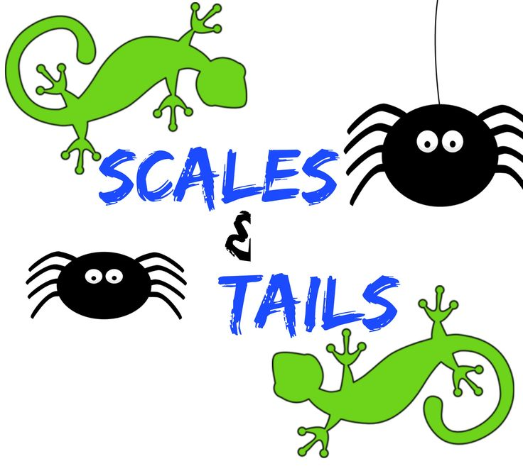 Join us for another fun children's activity tomorrow! Come see some cool, creepy, crawly animals that have Scales & Tails! At the library at either 10:00 AM or 2:00 PM.