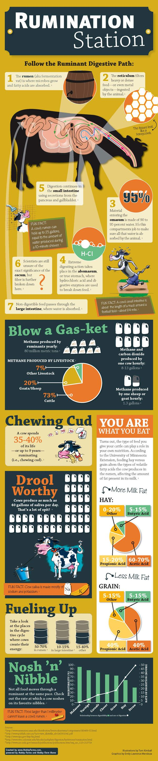 Take a look inside the complex stomachs of cows, sheep, goats and other ruminant livestock. - infographic