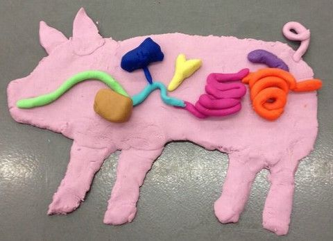 3 Great Animal Science activities that use Play Dough | One Less Thing