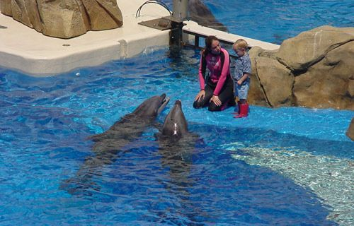 Sea World Orlando Florida | Where to go on holiday in May | #travel