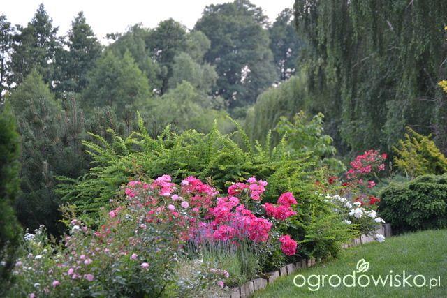 Jak więcej błędów nie popełnić...... - strona 93 - Forum ogrodnicze…
