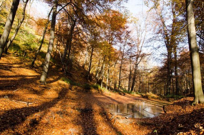 Róth Hajnalka Novemberi színek a Vértesben A kép november elején készült, Csákberény közelében lévő Cseresznyés-völgyben, az utolsó őszi színkavalkádot kihasználva. Több kép Hajnalkától:  https://www.facebook.com/nalkaroth/