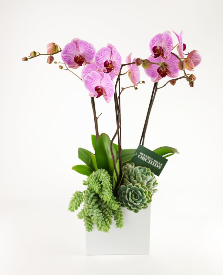 15 best orchid arrangements images on pinterest lilies Christmas orchid arrangements
