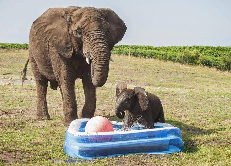 I love elephants by Sarah Lowman | Baby animals super cute ...