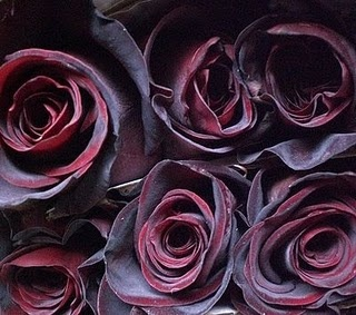 Black Baccara Roses, Also known as Black Magic Roses.