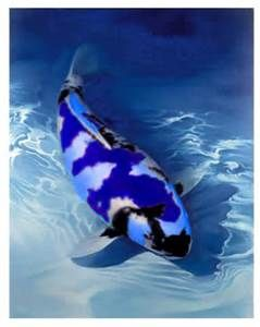 Pinterest the world s catalog of ideas for Purple koi fish