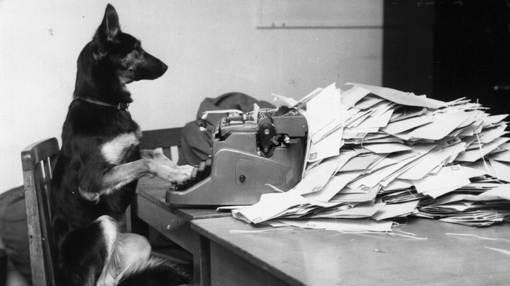 Petra, the Alsatian from the BBC's Blue Peter, answers some fan mail