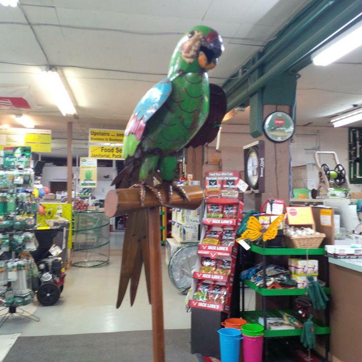 Meet Pepe our Metal parrot... Pretty Cool Bird!
