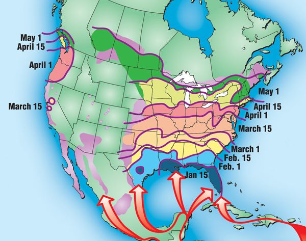 Purple Martin migration map.  The map shows the average first arrival dates for adult Purple Martins in your area.