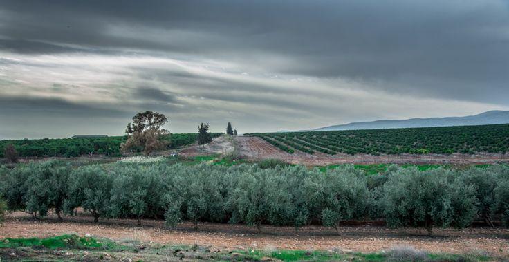 mediteranian winter landscape by ilan amihai on 500px