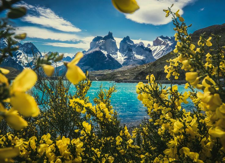 Spring in Patagonia. Torres del Paine national park (OC) by Mi-kko   -imgur