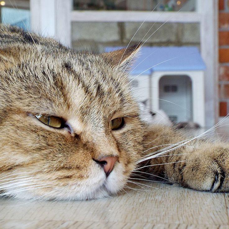 長寿の猫ちゃんが増えた昨今、「猫の介護」について相談を受けることが多くなりました。意識が高いペットオーナー様ほど、介護が十分にできないと自分を責め、自分を追い詰めていく傾向があります。もっと気楽に、猫ちゃんが穏やかな老後を過ごせる介護方法を、皆様と一緒に考えていきたいと思います。