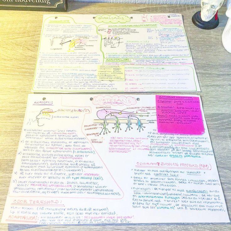 Taste and smell notes 👄👃🏻  _________________________________  #taste #smell #anatomy #medschool #medstud #medicalstudent #odontology #scrubs #futuredoctor #notes #mindmap #physiology #fysiologi #medisin #medisinstudent #medisinsa #dentistry #medicalstud #medicalschool #medlife #studyhard #studynotes