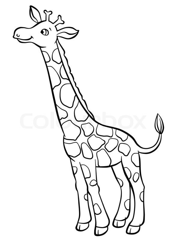 Stock image of 'Cute giraffe eating leaves from the tree'