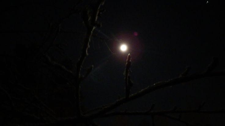 Moonligth in the garden