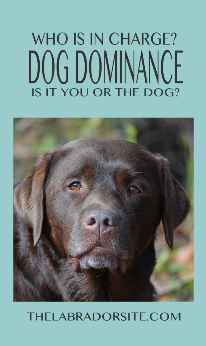 Alpha Dog The Important Facts About Dog Dominance And Pack