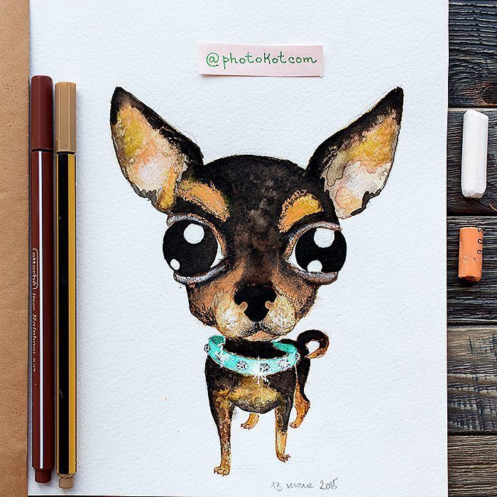 Drawing from instagram @photokotcom #иллюстрация #dog #рисунок #drawing #illustration #sketch #собака #character #photokot_com #чихуахуа #chihuahua #watercolor #акварель