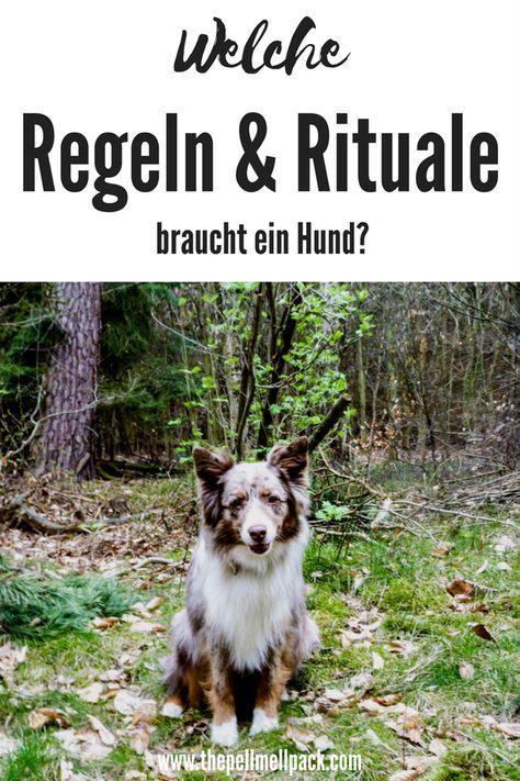 Regeln und Rituale im Zusammenleben mit Hund sind unglaublich wichtig | Hundeerziehung | Hundetraining | Alltagstraining | thepellmellpack.com