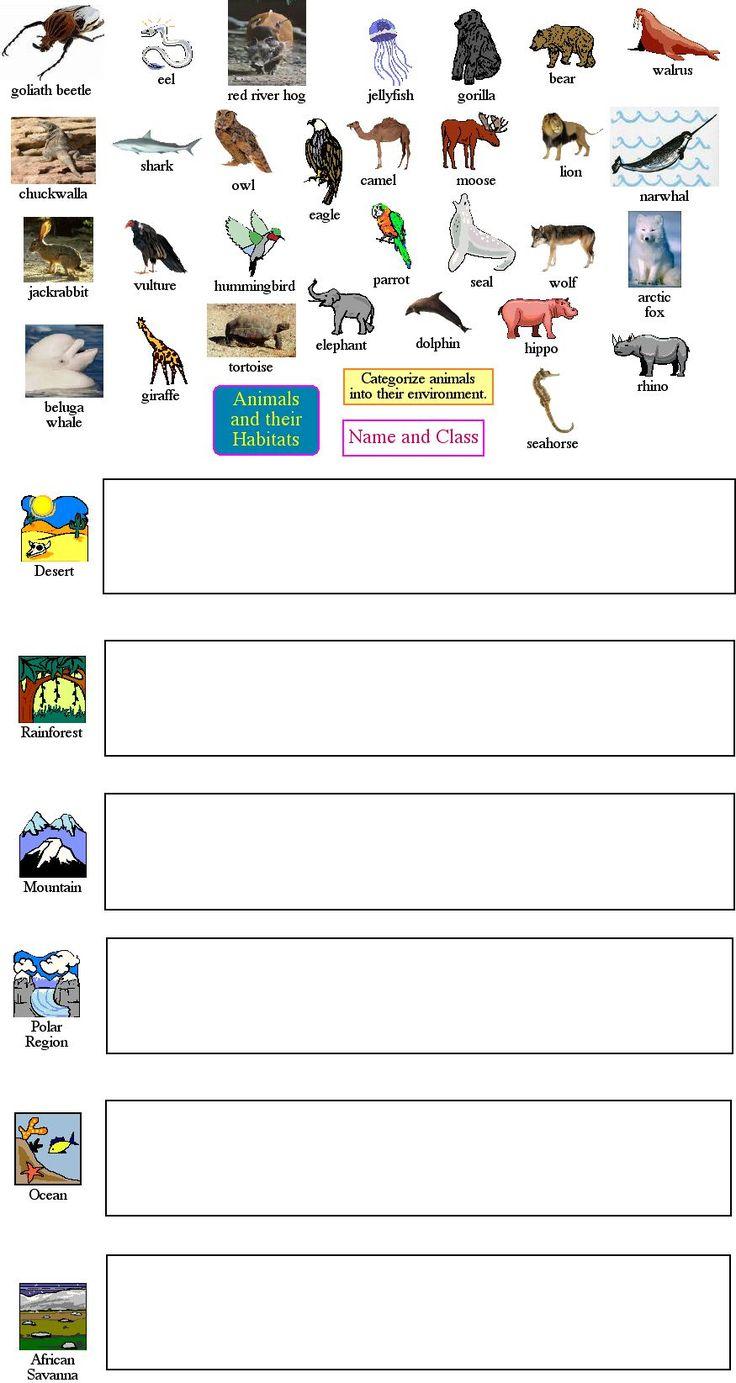 Animal Worksheet New 273 Animal Taxonomy Worksheet