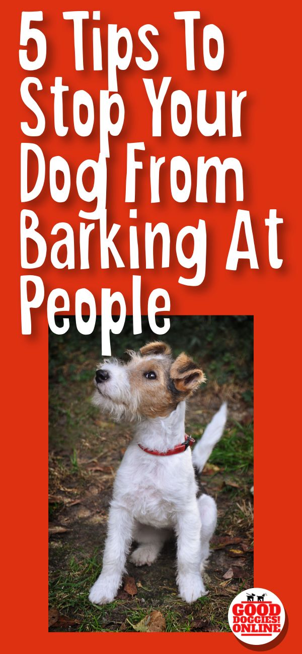If your dog barks at everyone, check out these 5 easy dog training tips on how to get your dog to stop barking at people. #dogs #dogtraining #barking