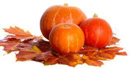 Pumpkin picking Freehold NJ | Wemrock Orchards