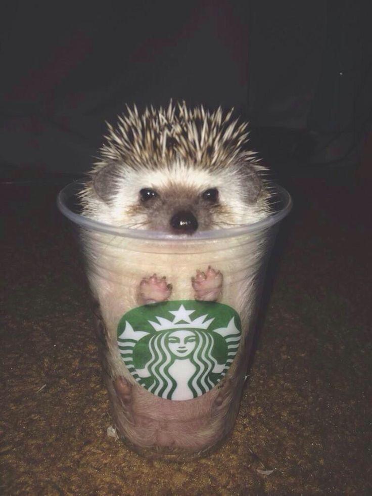 Everything likes Starbucks