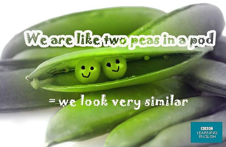 We Are Like Two Peas In A Pod English Idioms Pinterest