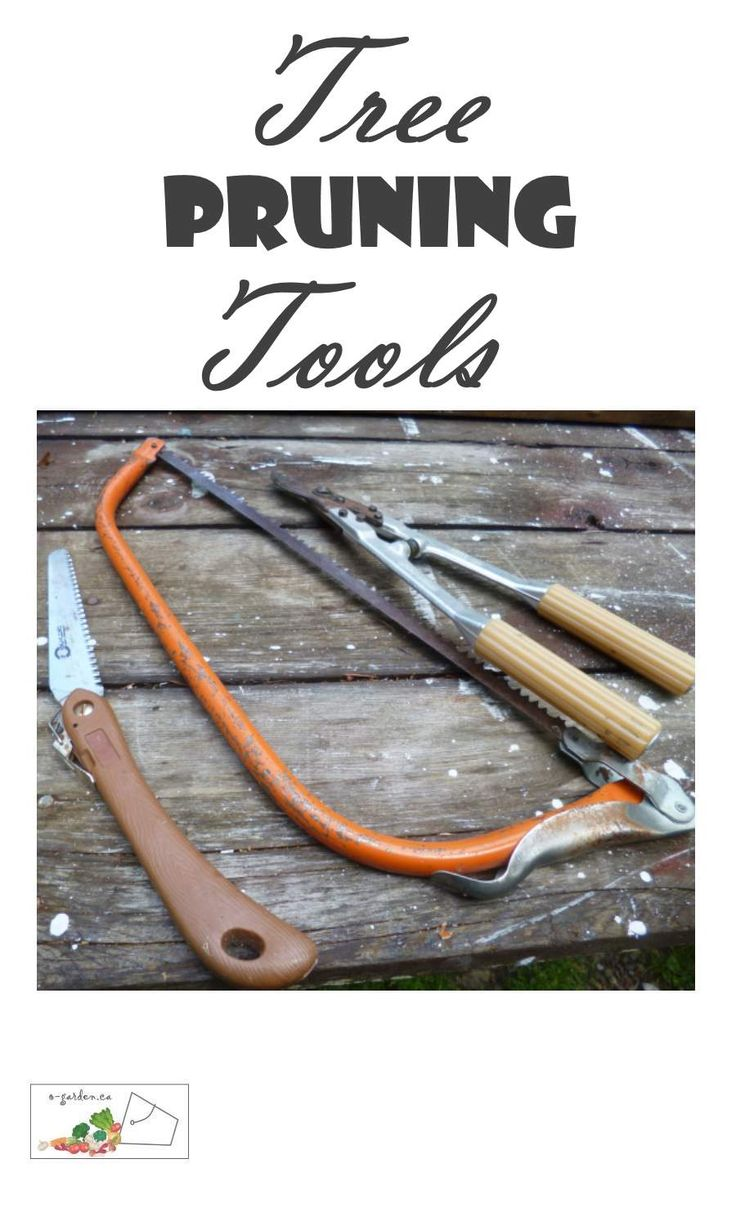 Tree Pruning Tools - sharp and clean for the least damage to the tree... Organic Gardening | Fruit Tree Pruning