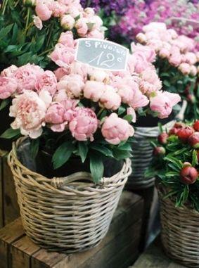 prettiest pink peonies