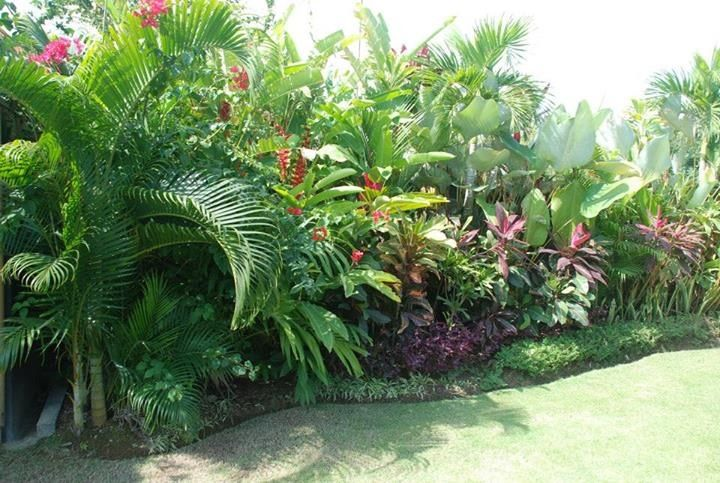 Tropical garden. Beautifully lush and thick.