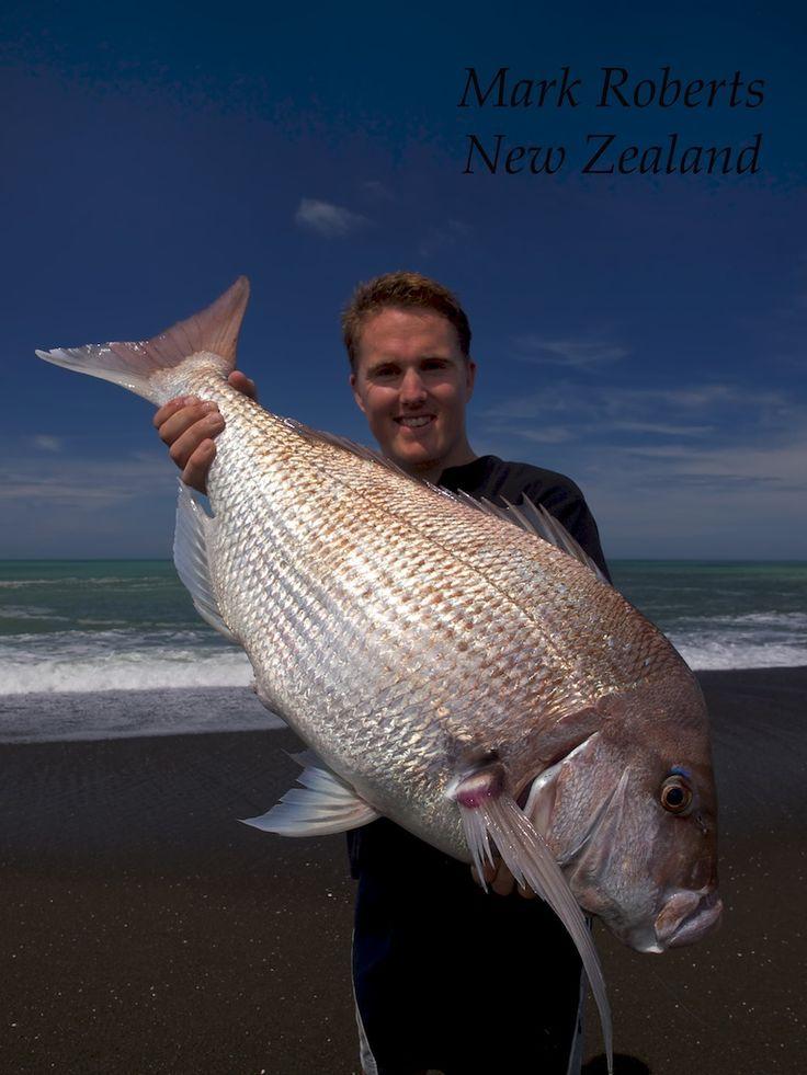 Big New Zealand Snapper
