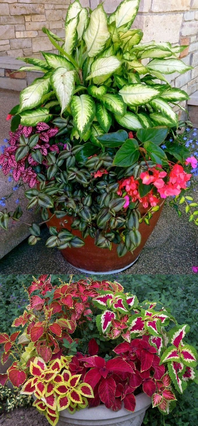 How to create beautiful shade garden pots using easy to grow plants with showy foliage and flowers. And plant lists for all 16 container planting designs! - aPieceofRainbow.com