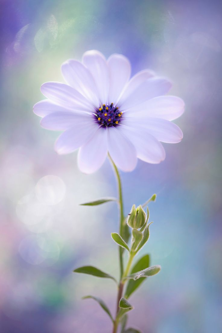 best images about beautiful flowersplants on pinterest pink