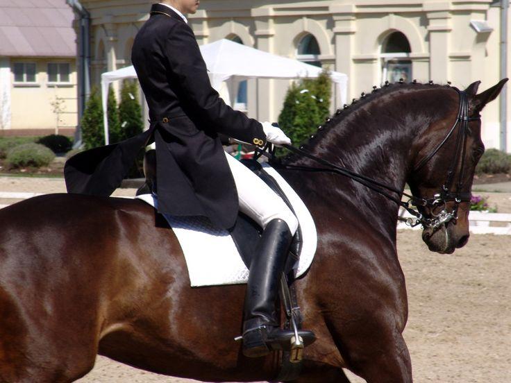 黒 馬 競争 イメージ 在庫 スポーツ 乗馬