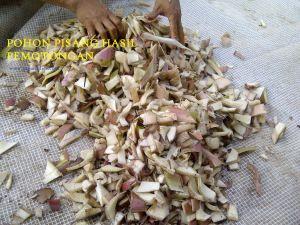 Pembuatan Pakan Kambing dari Pohon Pisang