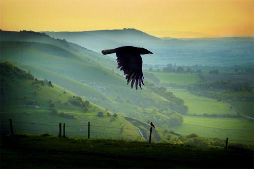 Ravens Flight, Sussex, England photo via versaversa