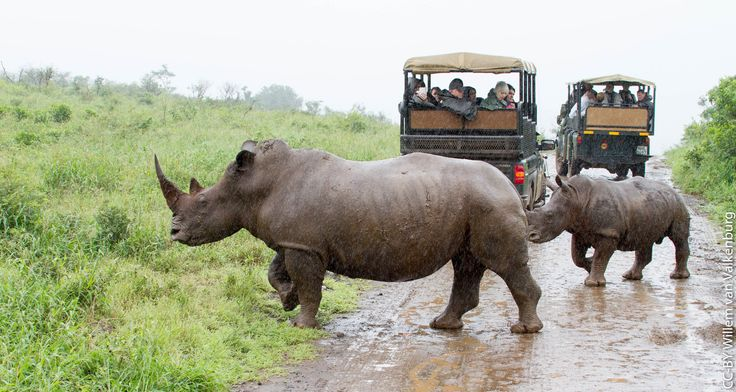 Travel is the only thing you can buy that makes you richer! Hluhluwe Umfolozi is the oldest game reserve in South Africa and is home to the iconic Big Five & other wildlife. Learn more, pick an expertly Crafted Holiday, instantly customise & book online or contact us >>