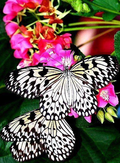 #flowers #luxurioushair #tropic #life   https://www.facebook.com/LH.Luxurious.Hair