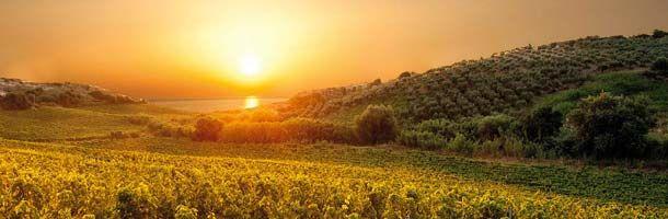 Librandi ∼ Kalabrien ∼ Italien - http://weinblog.belvini.de/librandi-kalabrien-italien