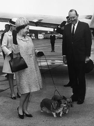 The queen's corgis have travelled the world with her. Shown here is Elizabeth II with her two dogs on the runway of the London airport, May 20, 1969. (Gamma-Keystone/Getty Images)