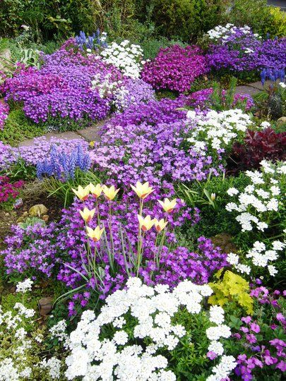 Ideas for a rockery - For great rock garden plants check out my board: http://pinterest.com/dougharrington/rock-gardens-ground-covers/