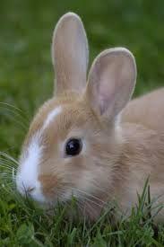 1000 images about les bebe lapins on pinterest search - Photo de lapin mignon ...