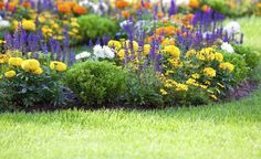 Sie wollen eine eintönige Rasenfläche aufwerten? Blühende Inselbeete lockern den grünen Teppich auf – auch ungewöhnliche Beet-Formen sind erlaubt. Wir zeigen, wie sich Inselbeete anlegen lassen und welche Bepflanzung sich am besten eignet.
