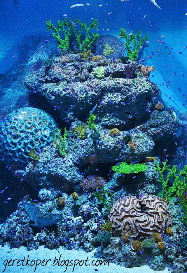 Beautiful Coral,SEAquarium, Singapore