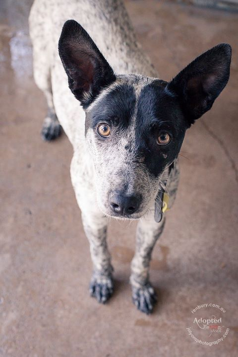This gorgeous girl and her ears got adopted today <3 | by Jo Lyons Photography