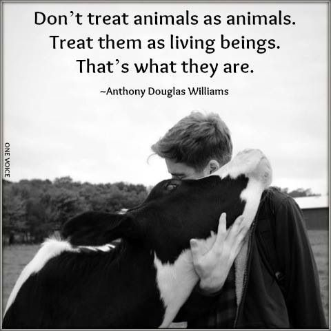 Don't treat animals as animals. Treat them as living beings. That's what they…