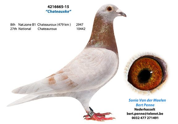 4216665-15 • Van der Maelen-Penne