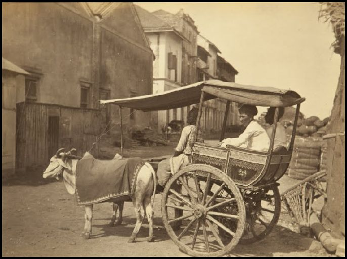The Hackneys were often the discarded carriages of the wealthy which served as taxis in the 19th century. :) #Hackney #carriage #taxi #bombay #mumbai #travel #tour #vintage #vintagestyle #vintagecollection #heritage #transport #museum #incredibleindia